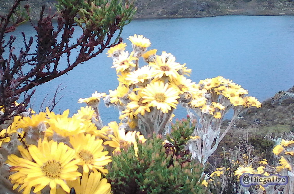 Un colorido contraste natural en la Laguna El Montón