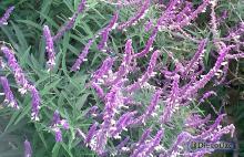 Jardín de Flores Violetas y Rosadas